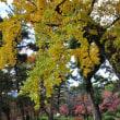 2017年・紅葉 庭園(広島県 名勝縮景園)その2