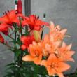 花植え及び清掃作業