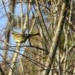 ほとぎの里緑地の野鳥たち