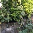 IKOI農園パーゴラのなりもの3種と瓢箪南瓜