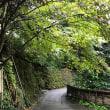 鎌倉 報国寺からの、、、