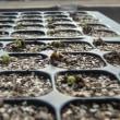 穂木発芽始まる