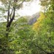 国立公園雲仙紅葉情報(第1号)