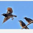 朝の鳥さんたち……