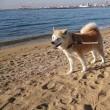 芦屋の浜〜♪
