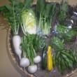 2018/05/07(月)発送の野菜セット
