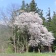 ゆっくり春が来ました