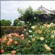県立花菜ガーデン