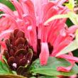 珊瑚花。。。!
