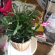 ジャコバサボテンが咲き始めた