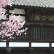 小諸懐古園から上田城、秀忠ルートをたどり桜に染まる。