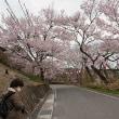 桜を巡る旅 その3