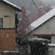 最後の雪か?