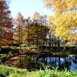 足立区 都市農業公園の紅葉・・4