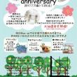 フラミンゴと猫&一周年イベント☆