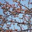 ぽかぽか陽気となり、春やなー