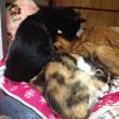 猫のチャチャが回復の兆し