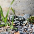 トノサマバッタと木の実