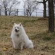 春の犬まみれ公園