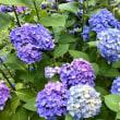 六月の花たち