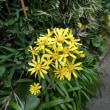 庭先の花。