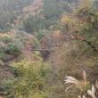 道志渓谷の自然:つり橋と紅葉