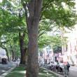 ◆夏の欅並木木陰がいい::