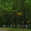 MTBで林道も走りました