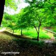小山田町の丘陵地帯に広がる「小山田緑地」