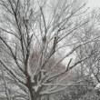 如月雑談、雪に