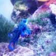 幸せの青い魚~海洋館