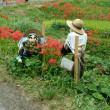 奈良明日香村の稲渕の棚田の彼岸花祭りに行ってきました♪