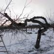 西高東低の冬型