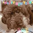 新年明けてます~今年もよろしくです♪♪