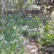 春の庭 パート3