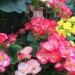 地球と水泡・男性と女性 〜5.15新月  【妄想覚書】