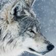 私の中に潜む狼・・