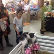 シティパークでペットショー (3匹の子豚とか……)