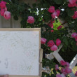 バラの花のスケッチ