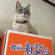 箱LOVEな猫