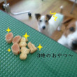 2018 5/18★今日はレン君・杏ちゃん・カン太君・アトム君です★