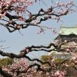 千里山は冷たい雨が 3月16日(金)雨