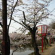 青春18切符2018春 琵琶湖桜巡り ③