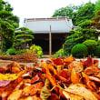 『秋めいて』 落葉