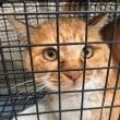 飼い主の居ない猫さんの去勢手術とケガ治療しました