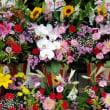 5月19日 明日の誕生花・ゆかりの花 花言葉は?(*^O^*)☆