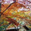 2017 三渓園の紅葉・・・