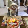 コロンちゃんが5歳のお誕生日を迎えました♪