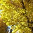 大学通りは秋まっ盛り