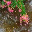 水の有る風景ー26